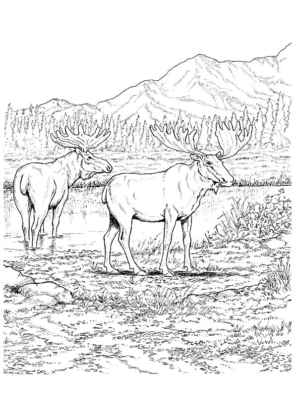 Bull Elk And Baby Elk Coloring Pages - Download & Print Online ... | 842x595