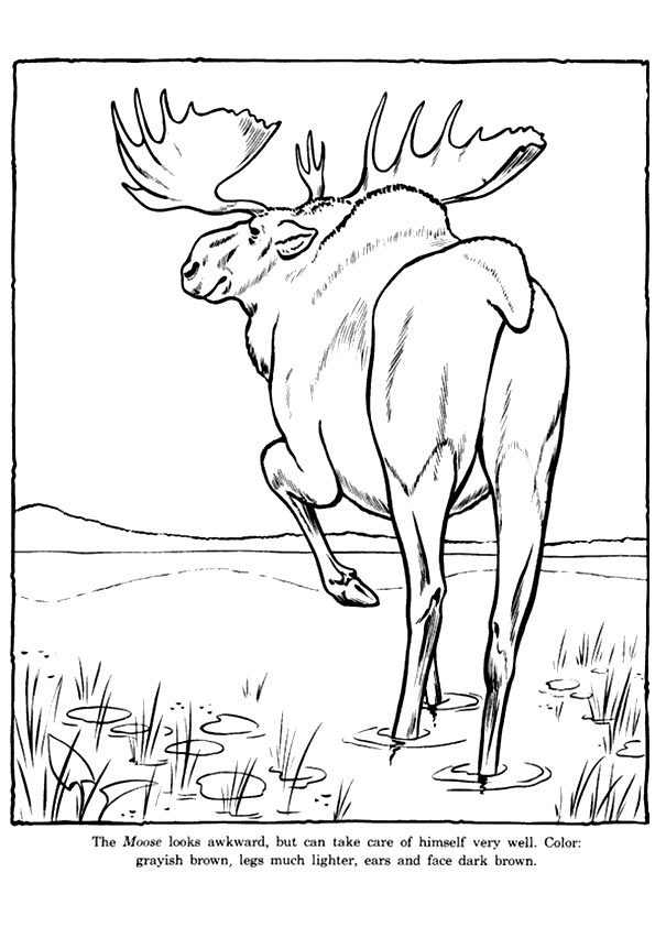 moose-coloring-page-0013-q2