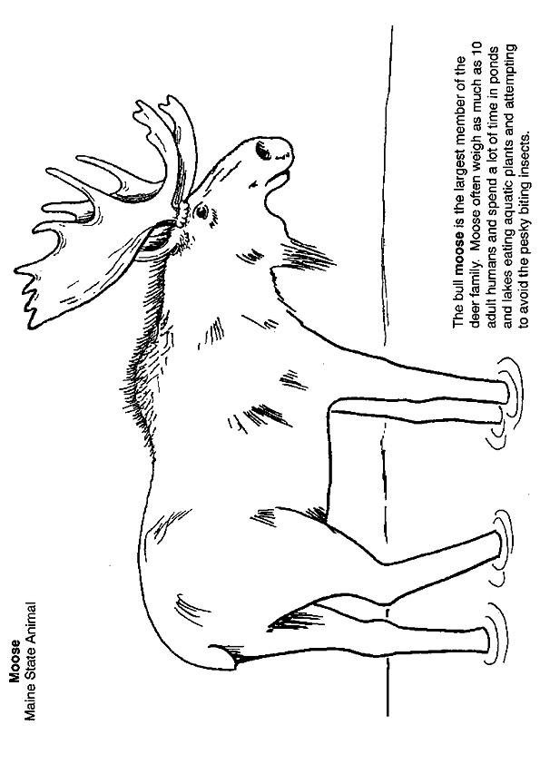 moose-coloring-page-0014-q2