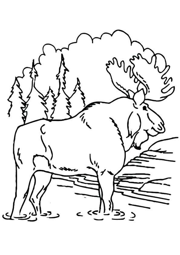 moose-coloring-page-0017-q2