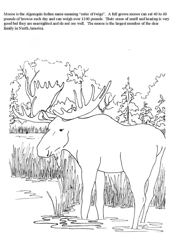 moose-coloring-page-0018-q2