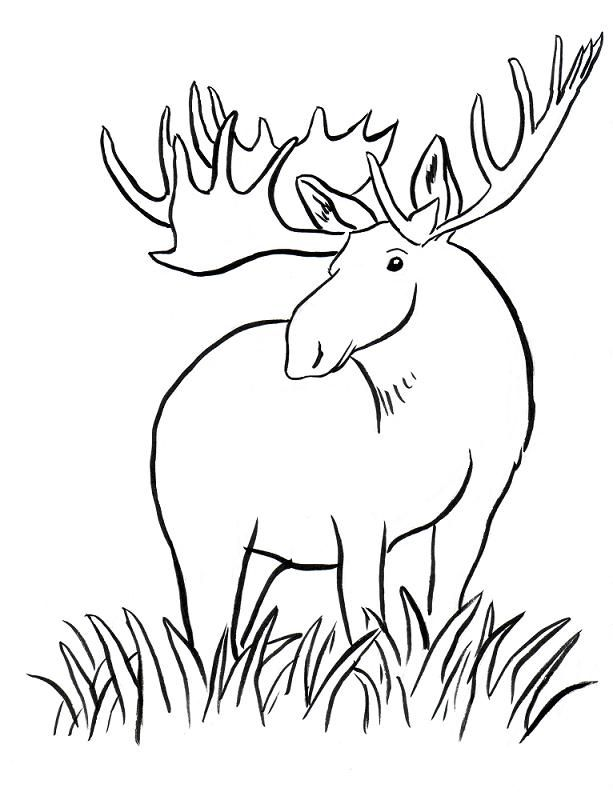 moose-coloring-page-0029-q1