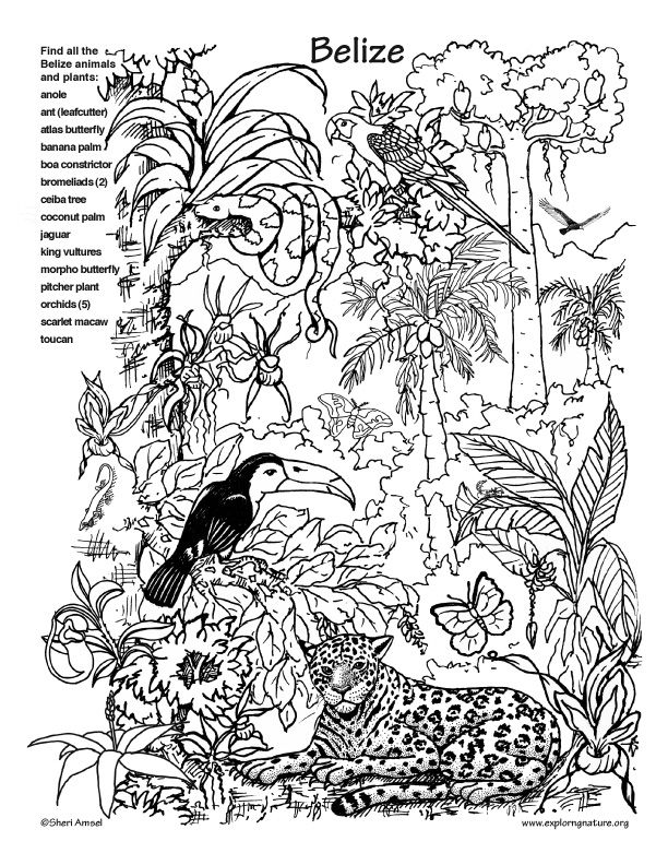 nature-coloring-page-0001-q1