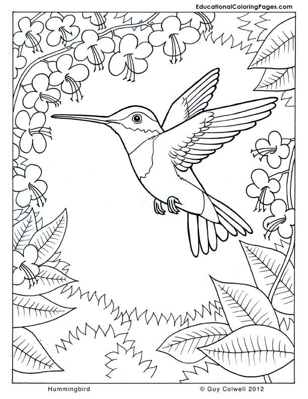 nature-coloring-page-0013-q1