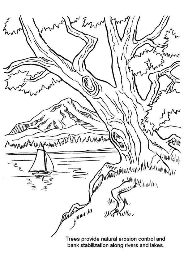 nature-coloring-page-0031-q2