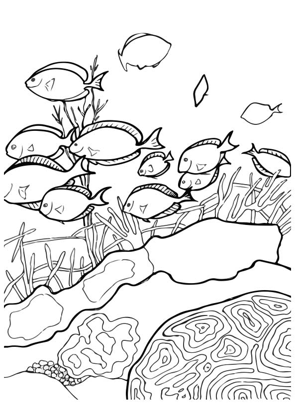 ocean-coloring-page-0024-q2