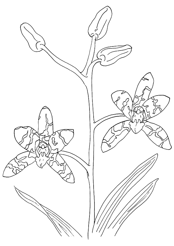 orchid-coloring-page-0002-q2