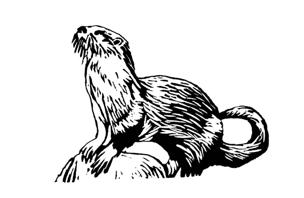 otter-coloring-page-0015-q1