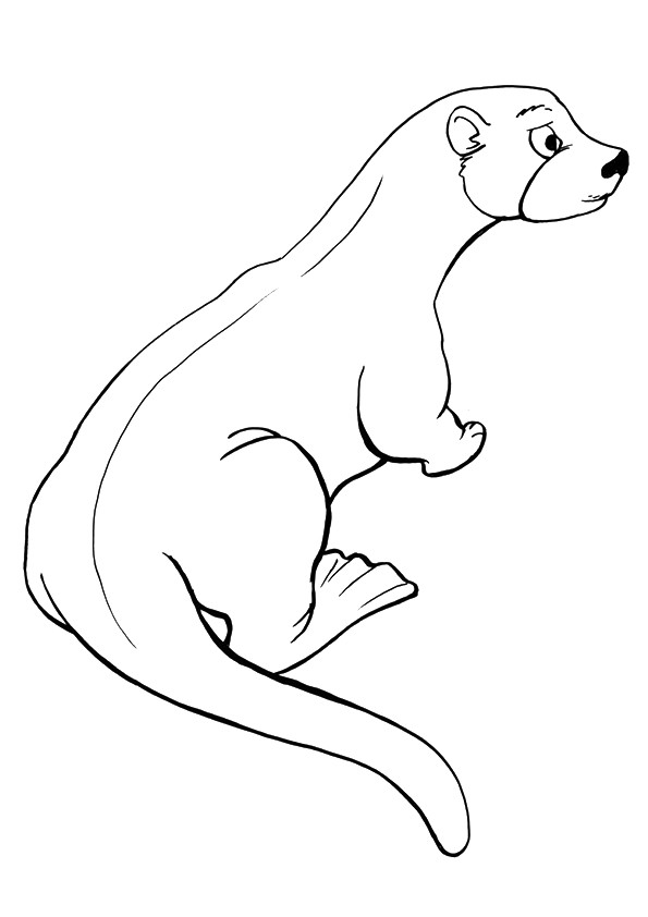 otter-coloring-page-0024-q2