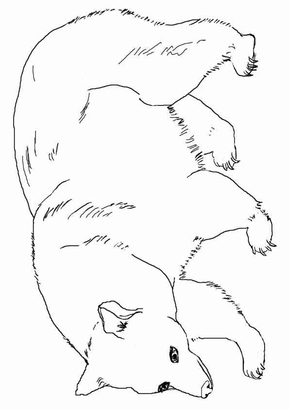 panda-coloring-page-0008-q2