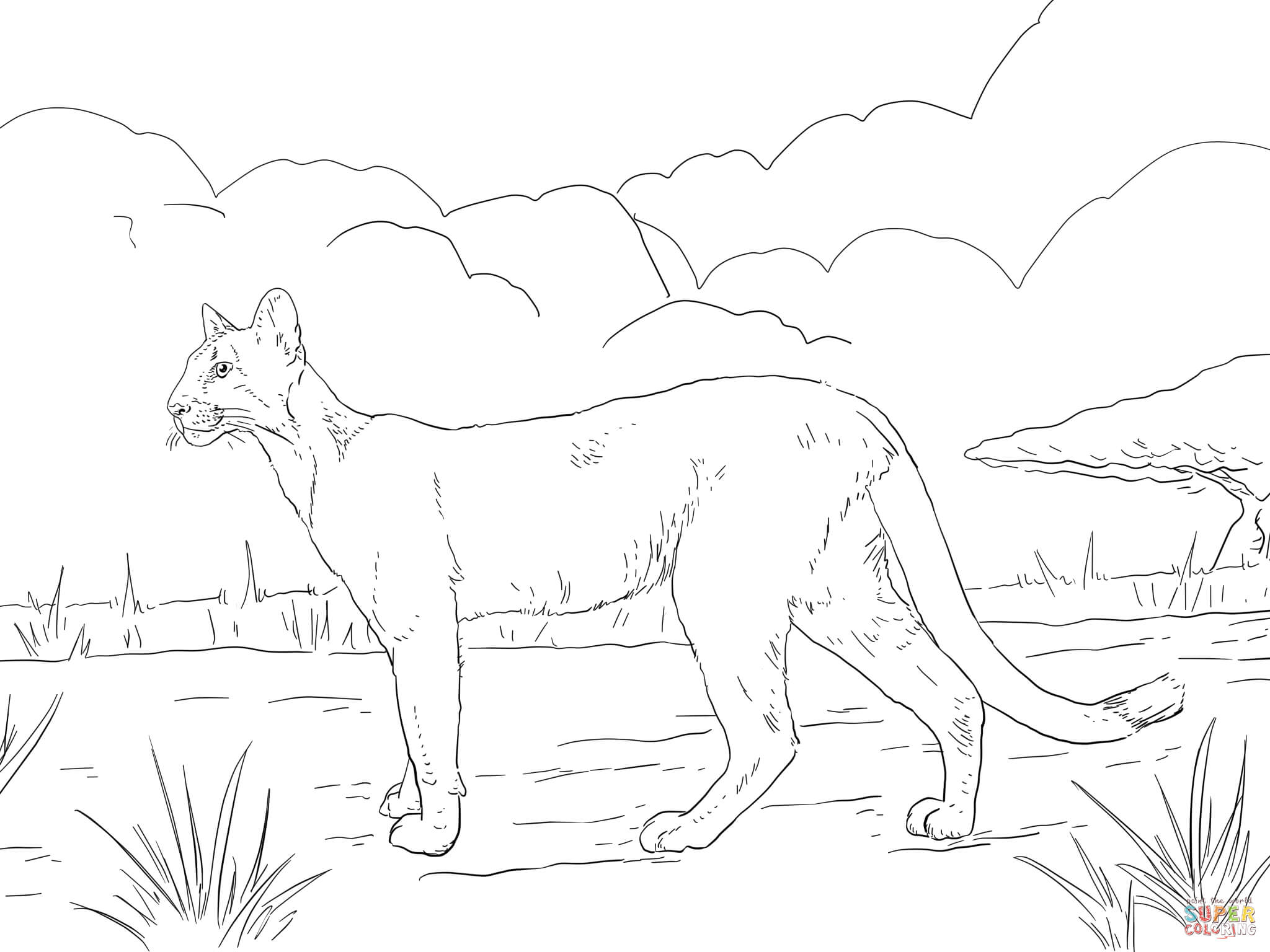 panther-coloring-page-0005-q1