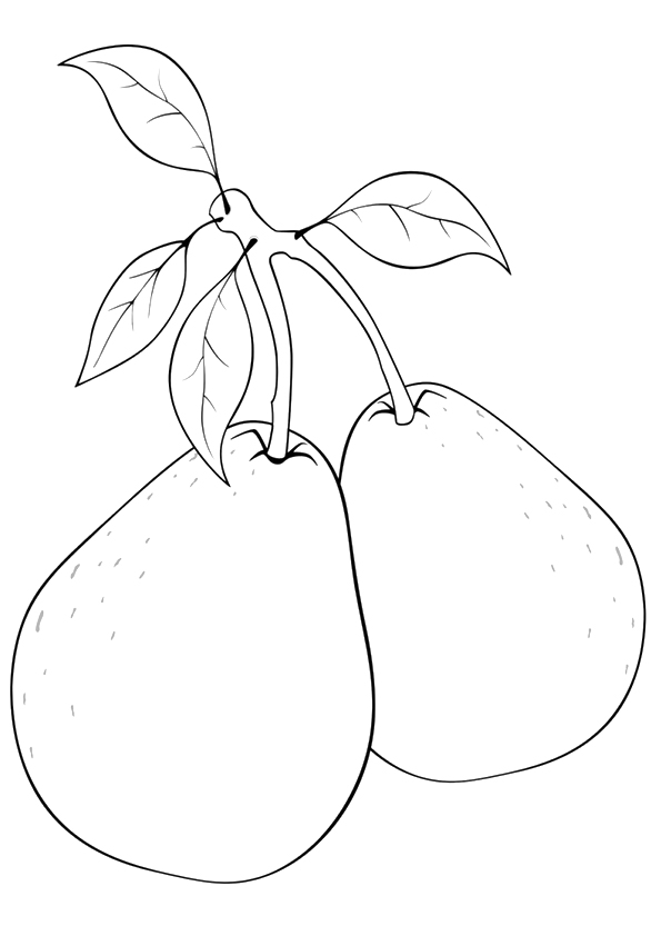 pear-coloring-page-0006-q2