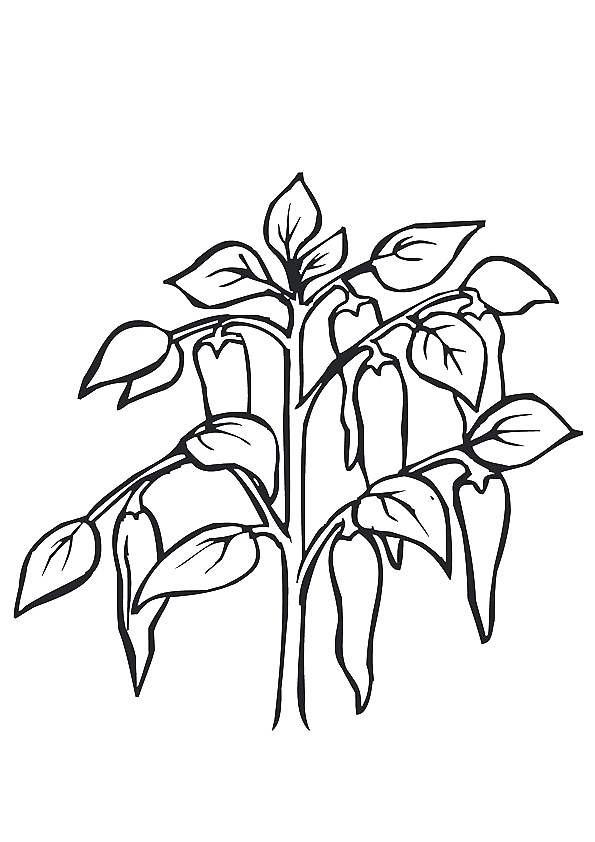 pepper-coloring-page-0011-q2