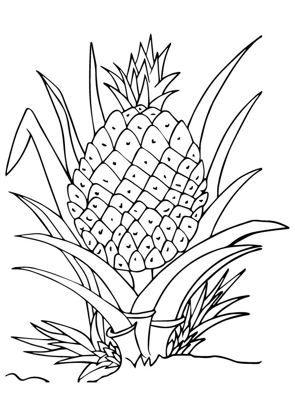 pineapple-coloring-page-0001-q2