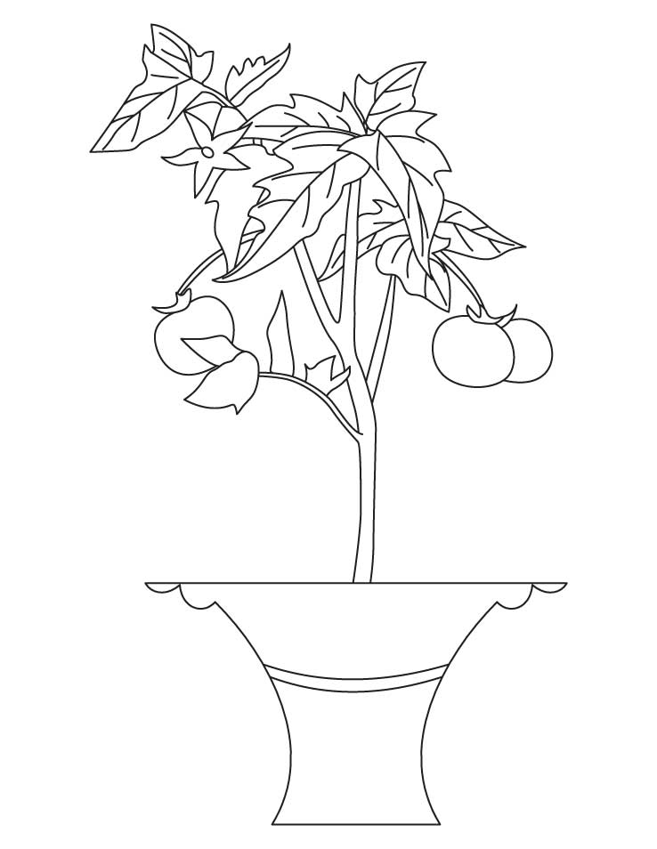 plant-coloring-page-0021-q1