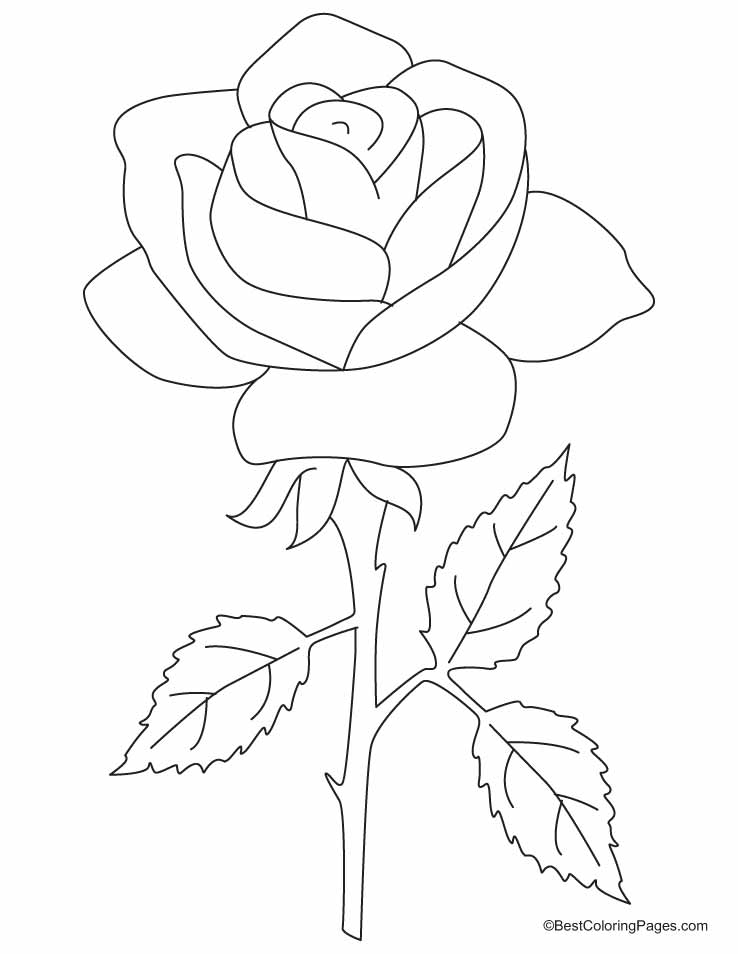 rose-coloring-page-0009-q1