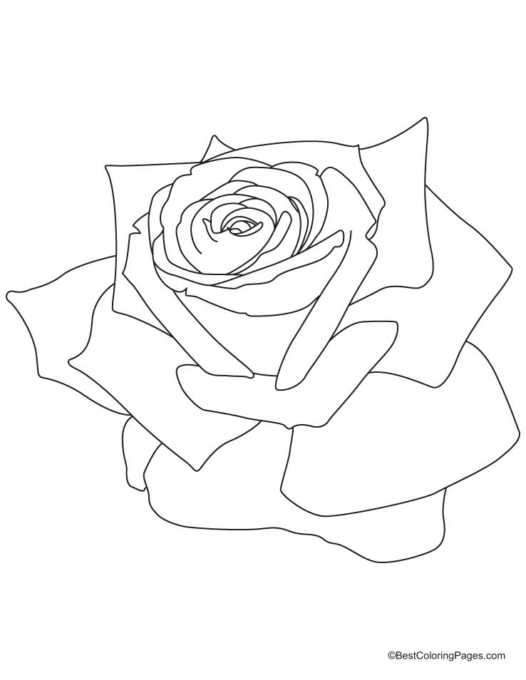 rose-coloring-page-0011-q1