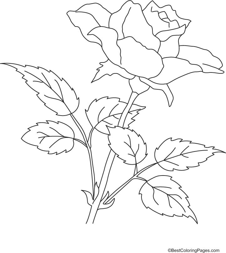 rose-coloring-page-0013-q1