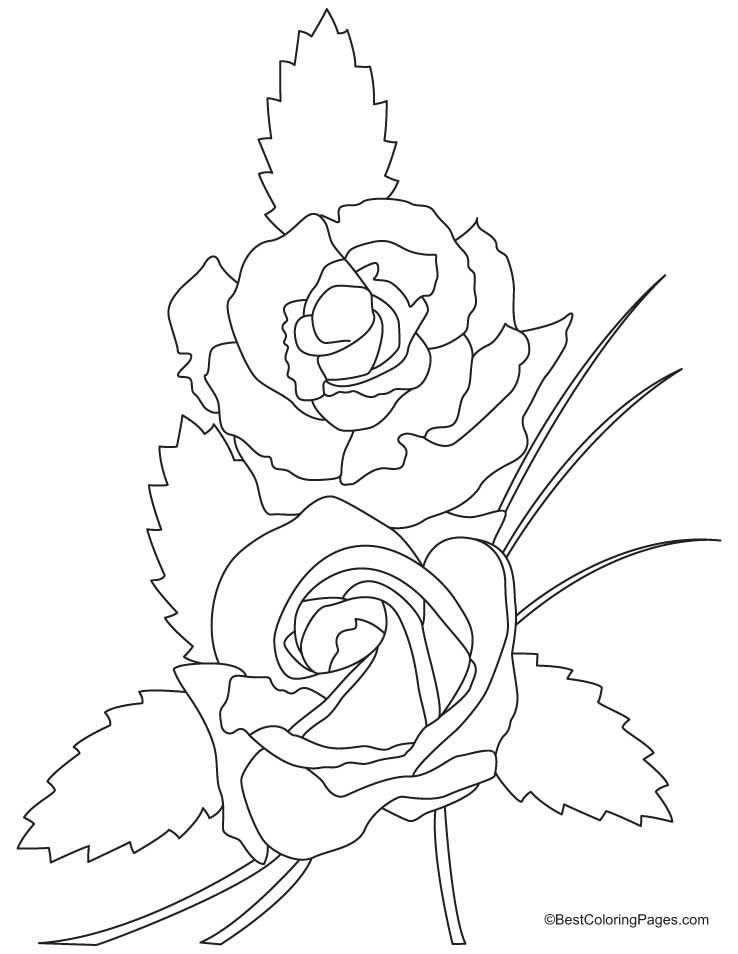 rose-coloring-page-0018-q1