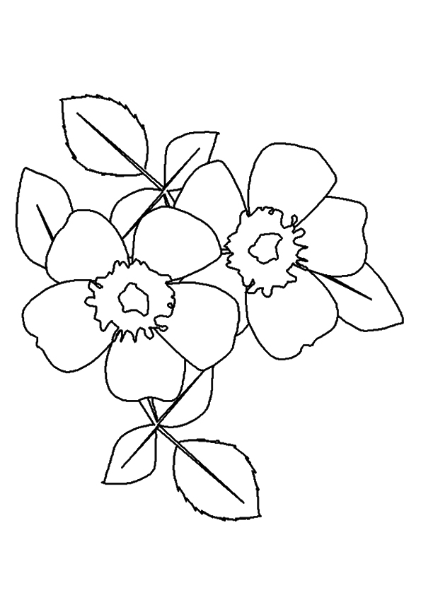 rose-coloring-page-0023-q2