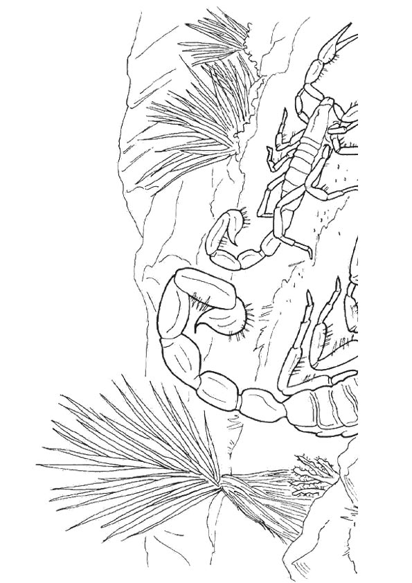 scorpion-coloring-page-0001-q2