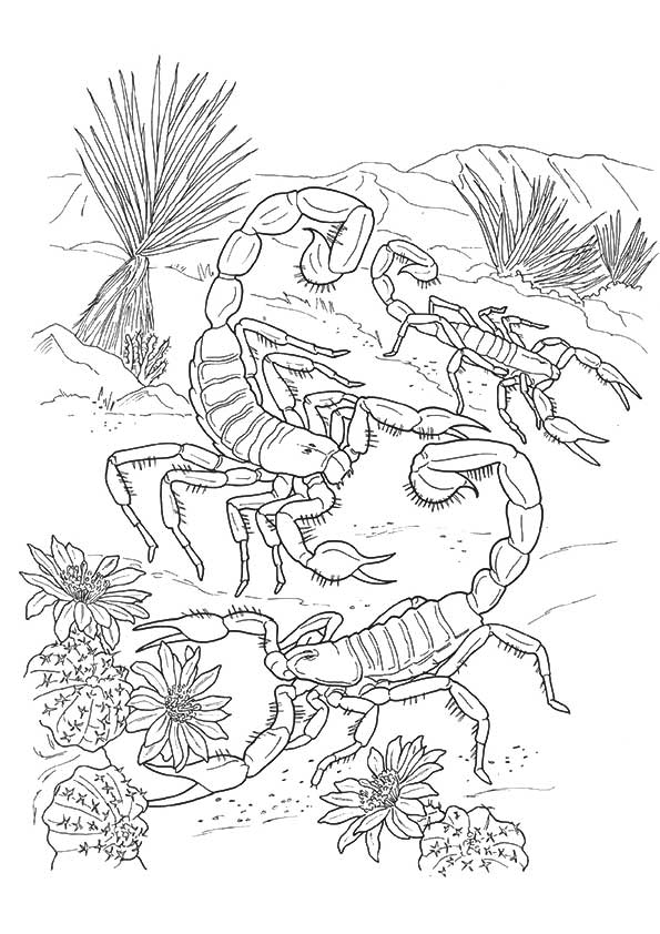 scorpion-coloring-page-0002-q2