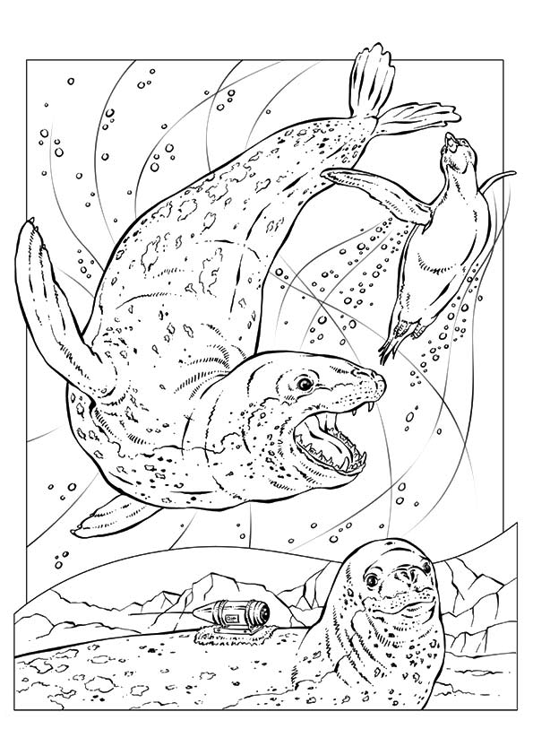 Two Leopard Seals coloring page | Free Printable Coloring Pages | 842x595