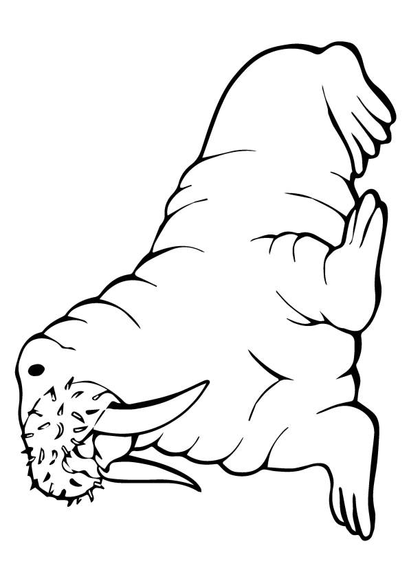 seal-coloring-page-0005-q2