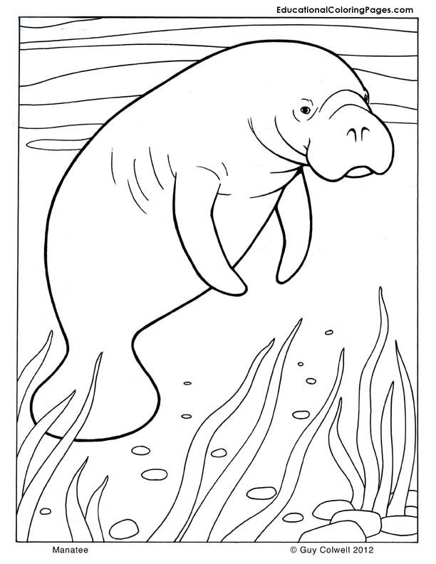seal-coloring-page-0009-q1