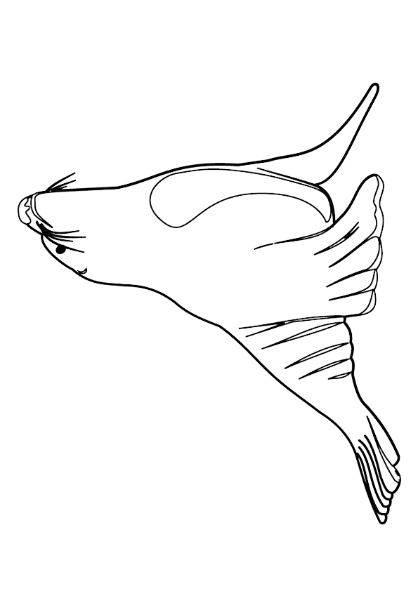 seal-coloring-page-0011-q2