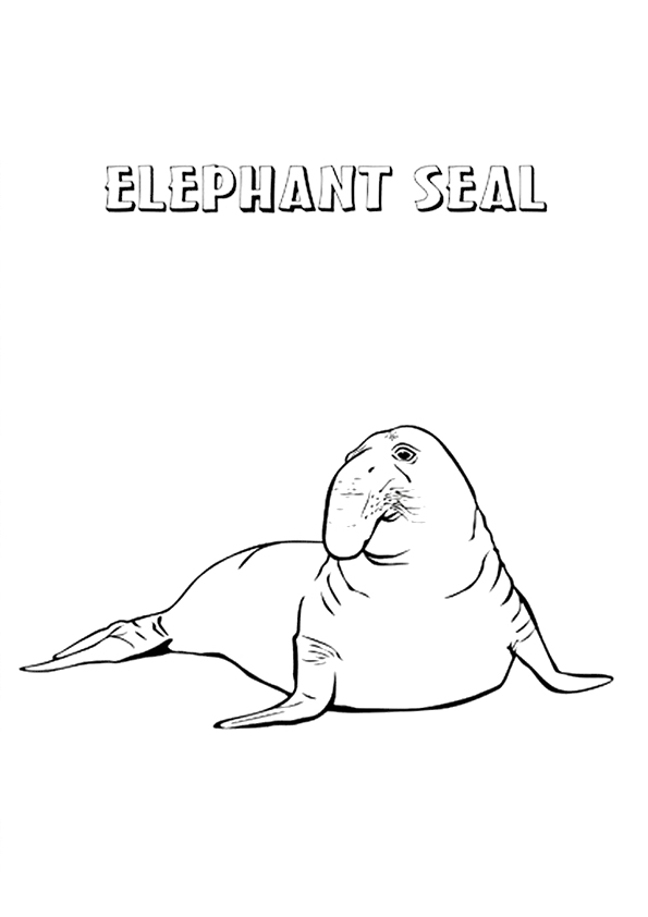 seal-coloring-page-0014-q2