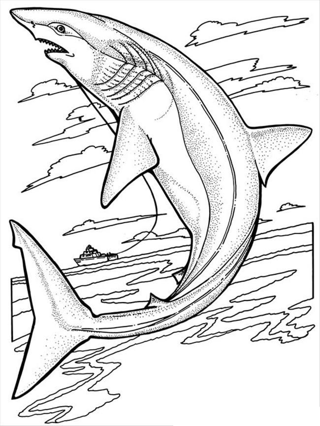 shark-coloring-page-0003-q1