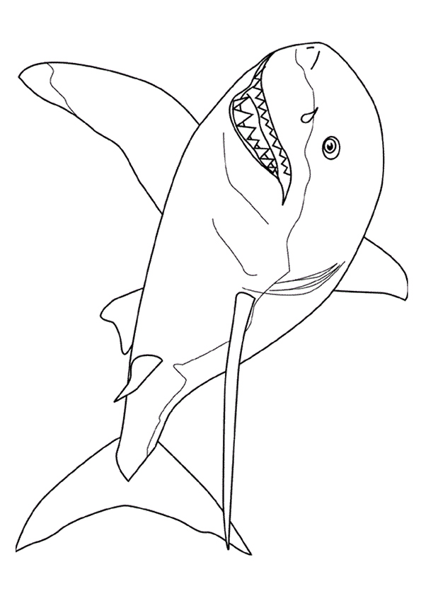 shark-coloring-page-0005-q2