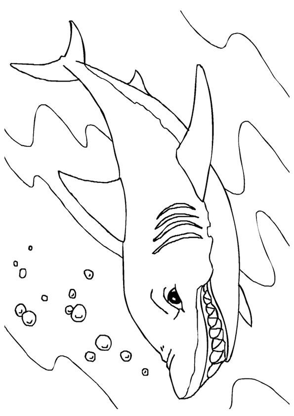shark-coloring-page-0007-q2