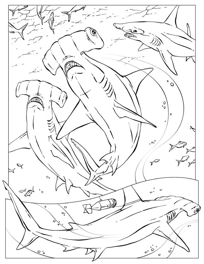 shark-coloring-page-0012-q1