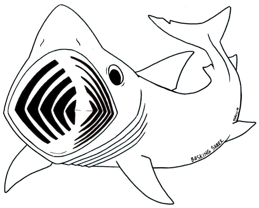 shark-coloring-page-0013-q1