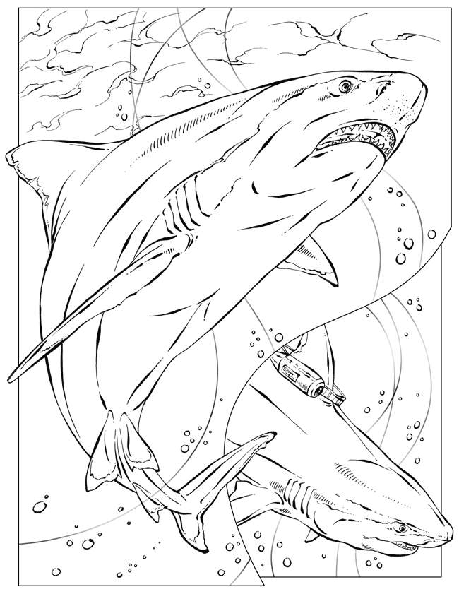shark-coloring-page-0015-q1