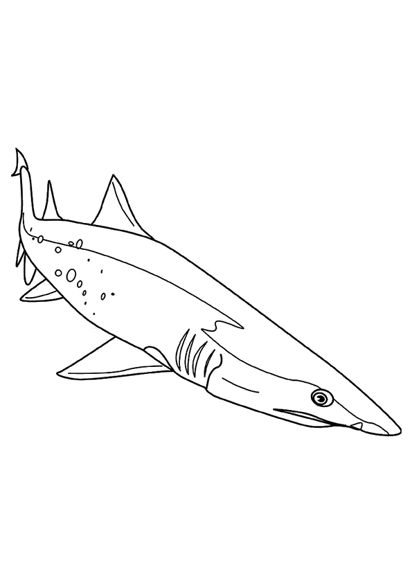 shark-coloring-page-0028-q2