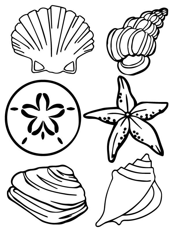 shell-coloring-page-0001-q2