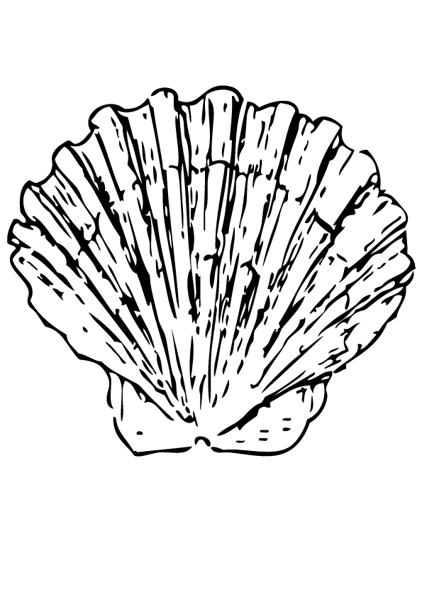 shell-coloring-page-0003-q2