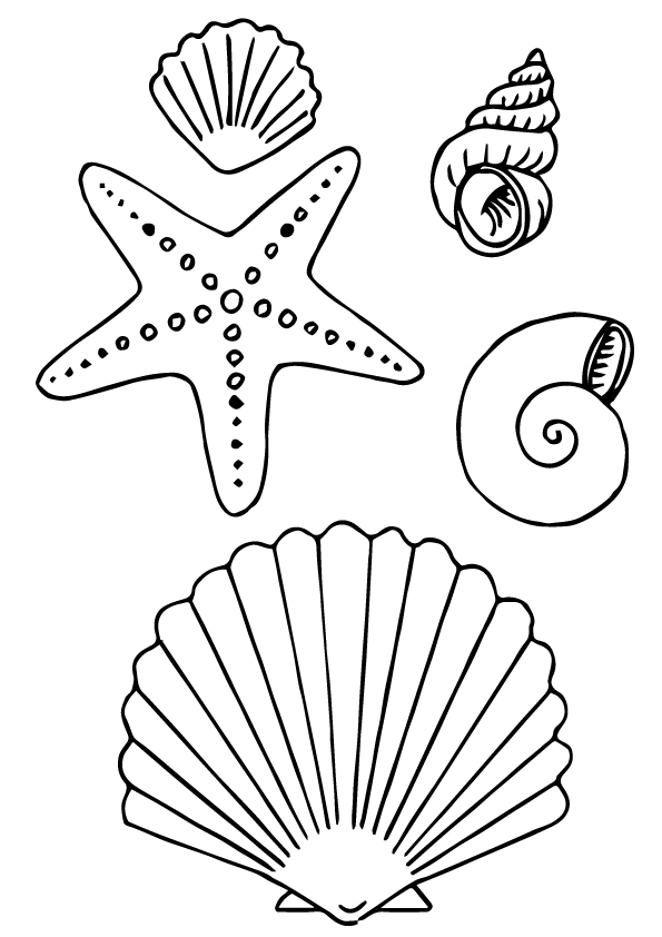 shell-coloring-page-0005-q2