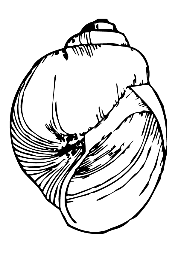 shell-coloring-page-0006-q2