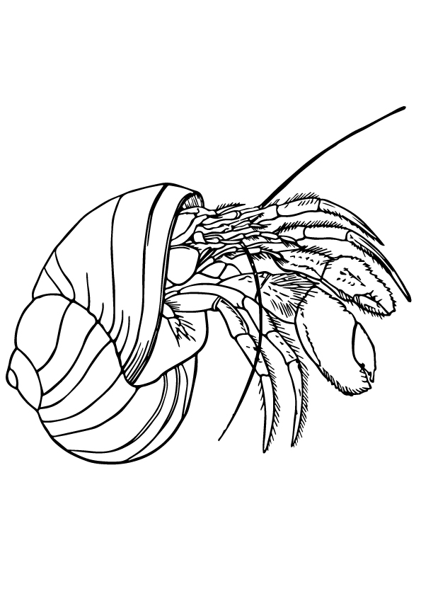 shell-coloring-page-0009-q2