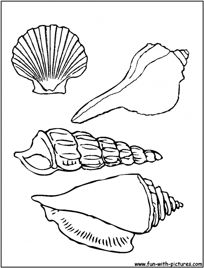 shell-coloring-page-0017-q1