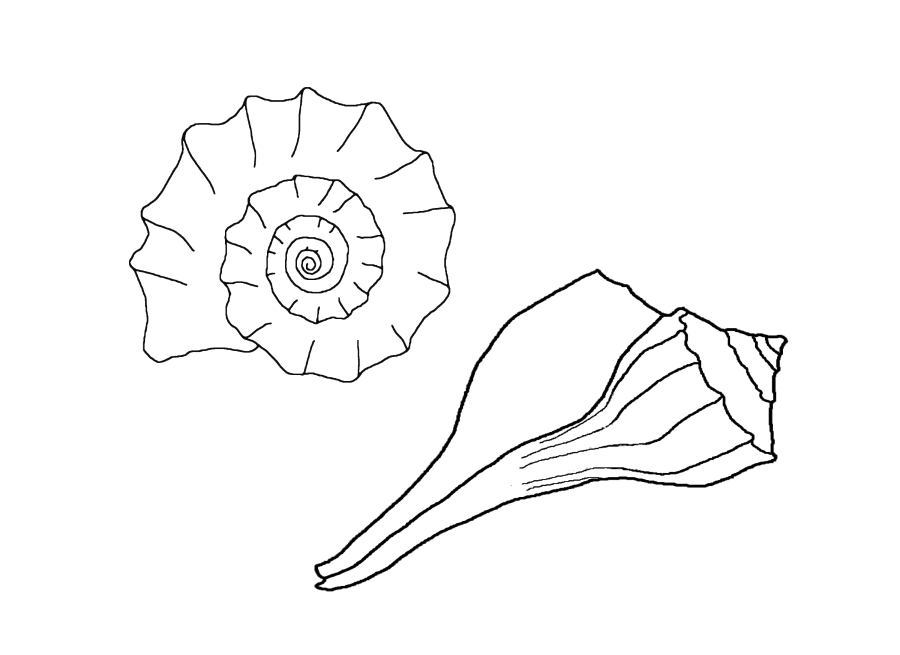 shell-coloring-page-0029-q1