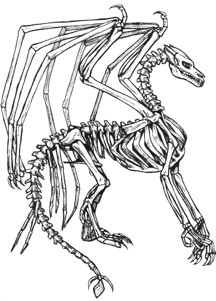 skeleton-coloring-page-0002-q1
