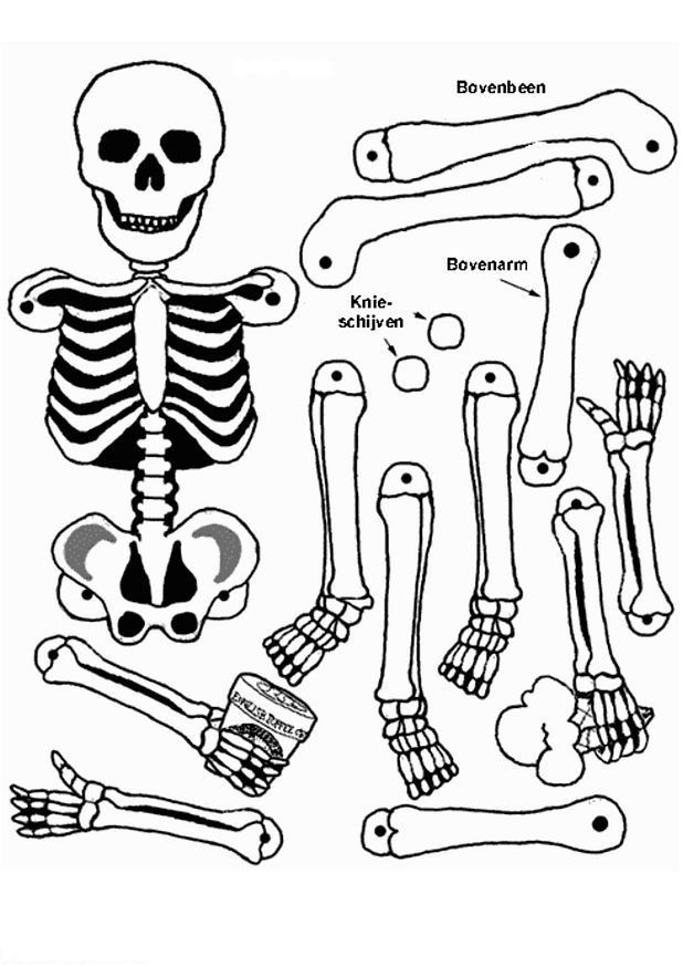 skeleton-coloring-page-0026-q1
