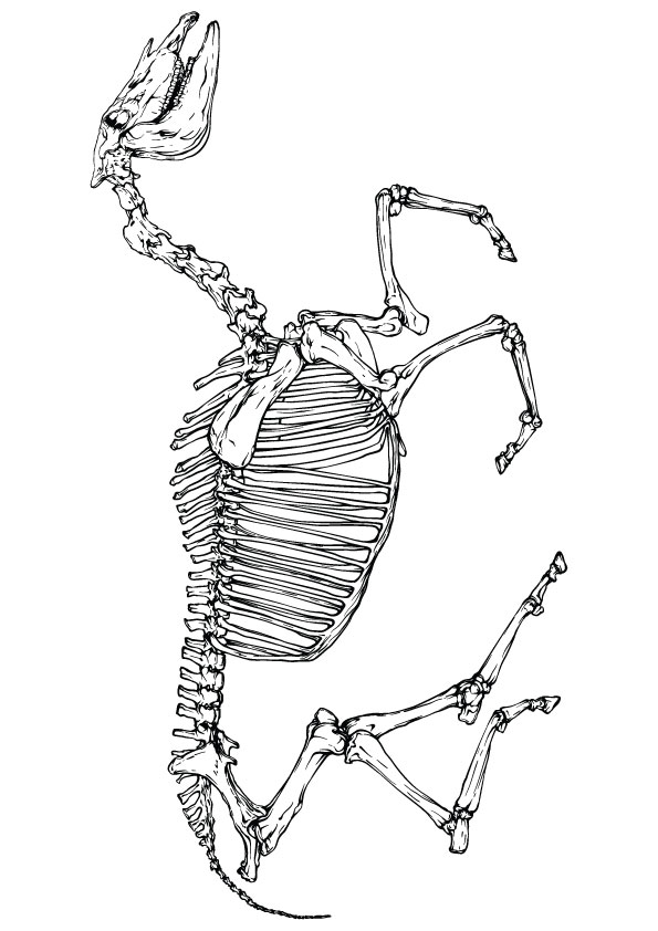 skeleton-coloring-page-0029-q2