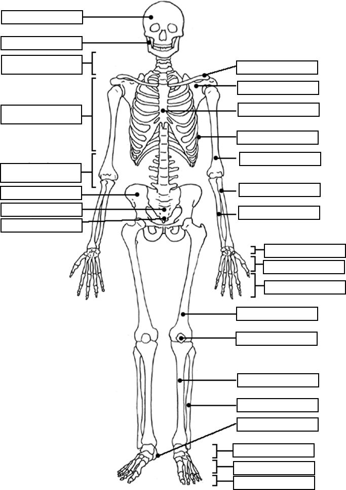 skeleton-coloring-page-0032-q1