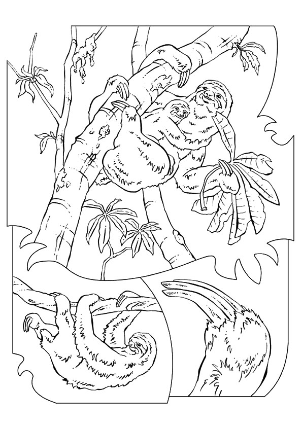 sloth-coloring-page-0009-q2